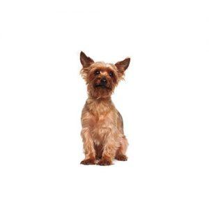 Furrylicious Australian Terrier