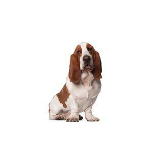 Furrylicious Basset Hound