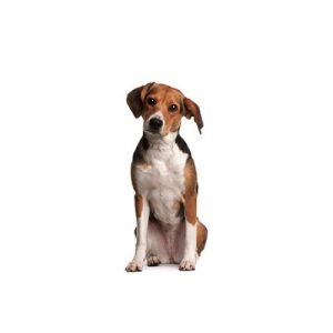 Furrylicious Beagle