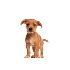 Furrylicious Border Terrier