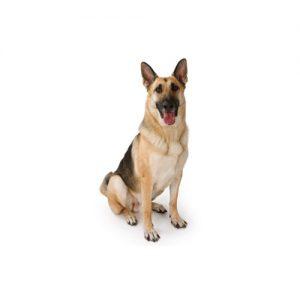 Furrylicious German Shepherd