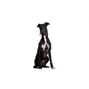 Furrylicious Greyhound