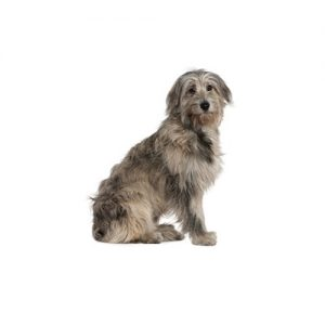 Furrylicious Irish Wolfhound