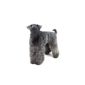 Furrylicious Kerry Blue Terrier