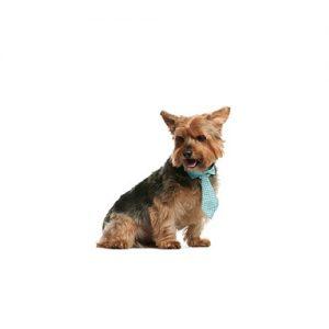 Furrylicious Norwich Terrier