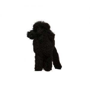 Furrylicious Poodle