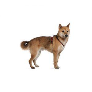 Furrylicious Shiba Inu