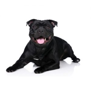 Furrylicious Staffordshire Bull Terrier