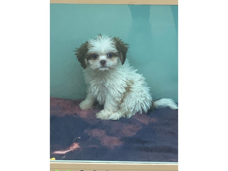 Peketzu-DOG-Female-White/Red/black-3047619-Furrylicious